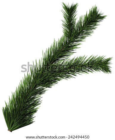 Christmas tree fir branch on white background - stock photo