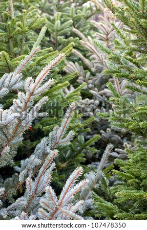 Christmas tree in the market place - stock photo