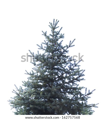 christmas tree without ornaments stock photos christmas