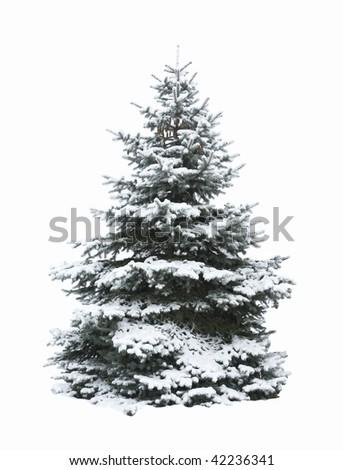 Christmas Tree - Isolated over White background - stock photo