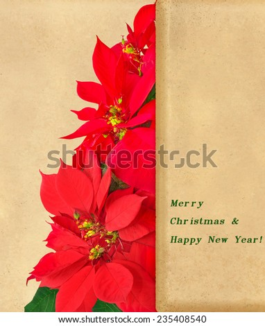 Christmas tree made of red poinsettia flowers - stock photo