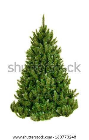 Christmas tree on white - stock photo