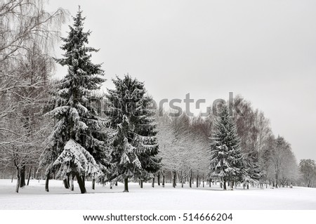 Christmas trees and deciduous trees in a park under snow after a snowfall in winter.