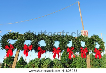 christmas trees for sale - stock photo