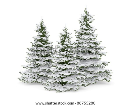 Christmas trees with snow isolated on white .