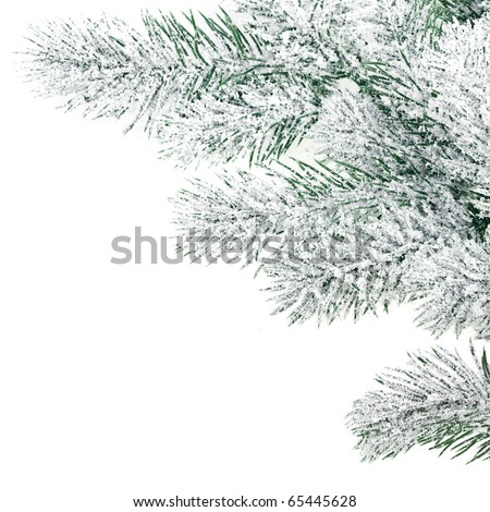 Christmas winter snowy spruce branch on white - stock photo