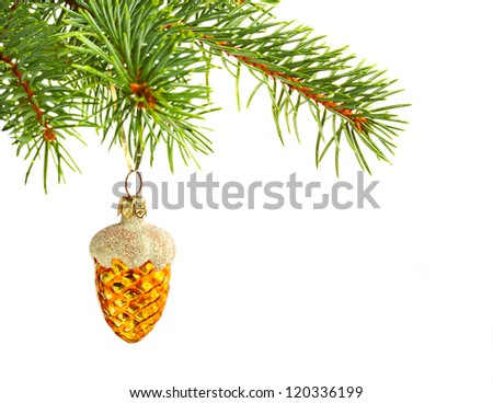 Christmas yellow cone on fir tree isolated on white background.