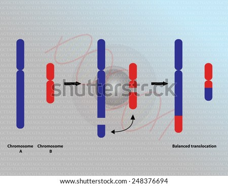 Chromosomal translocation - stock photo