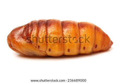 Chrysalis Larval food of Asians thailand - stock photo