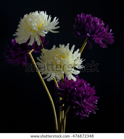 Chrysanthemum flowers in vase on black background