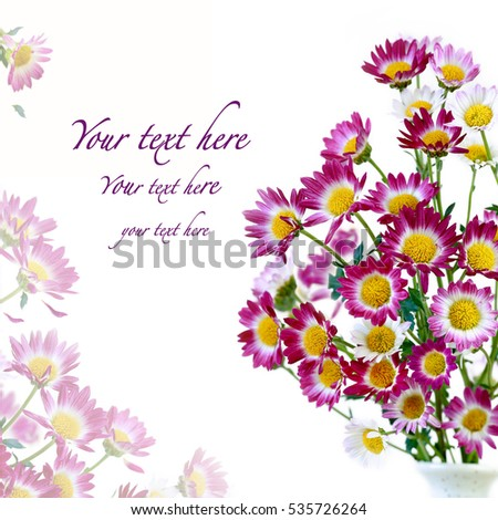Chrysanthemum flowers isolated on white background.