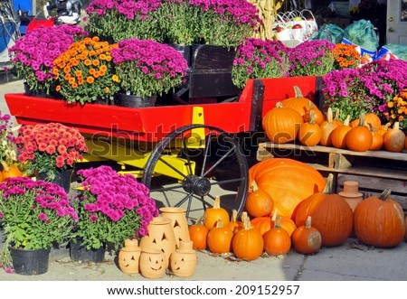 Chrysanthemums and pumpkins for sale at an outdoor market