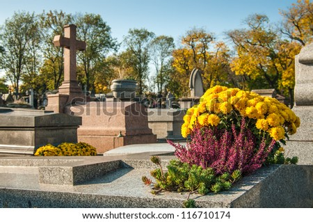 chrysanthemums on the tomb in a graveyard - stock photo