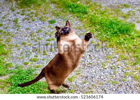 Fat Cat Stock Images, ...