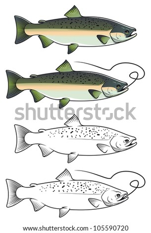 Chum salmon fish in color and w/b versions for fishing design. Vector version also available in gallery