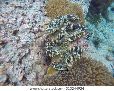 CHUMPHON, THAILAND - AUGUST 27,2015:Koh Ngam Yai Chumphon Thailand,Tropical Coral reef, Underwater shot. Anemones and Soft Corals, Vibrant Colors. Beautiful underwater clip.