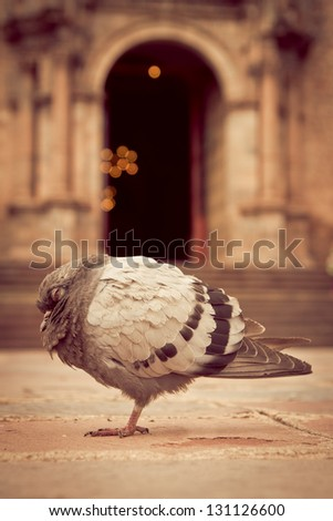Church and a Pigeon sleeping in front - stock photo