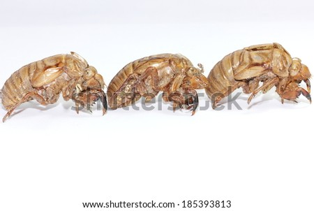 Cicada shells on a white background