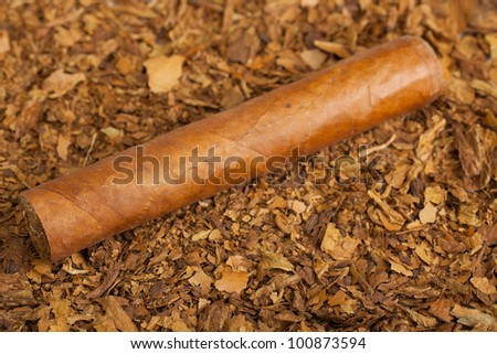 cigar on a tobacco background - stock photo