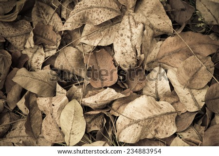 cigarette color leaf background