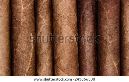 Cigars in a row close-up background
