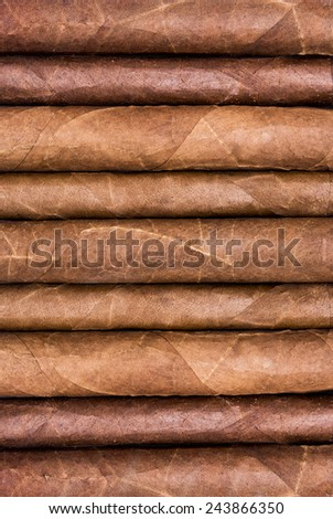 Cigars in a row close-up background - stock photo
