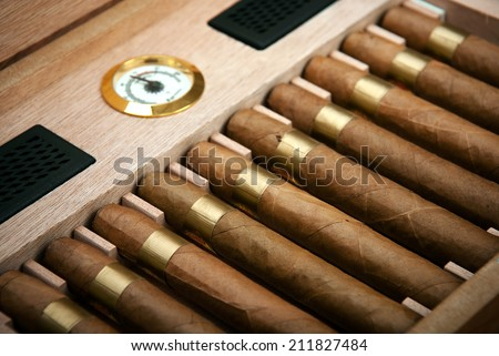 cigars in the humidor - stock photo