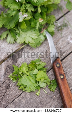 Cilantro. Coriander leaves chopped on the wooden board