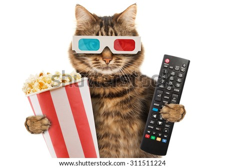 Cinema concept. Cat in the 3d glasses with popcorn basket. Funny cat with a remote control to TV. - stock photo