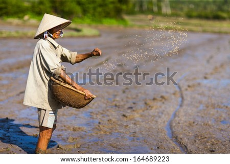 CIRCA APRIL 2010 - QUY NHON, VIETNAM - A farmer tosses rice seeds on a cleared rice field, on 25 April 2010, in Quy Nhon, Vietnam.