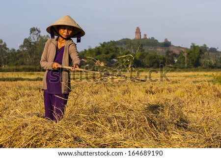CIRCA APRIL 2010 - QUY NHON, VIETNAM - A woman farmer gathers hay in a field, on 25 April 2010, in Quy Nhon, Vietnam.