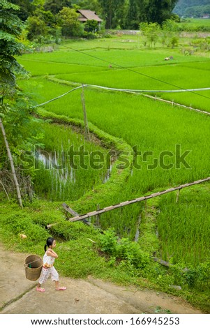 CIRCA AUGUST 2011 - MAI CHAU, VIETNAM - A girl walks by rice paddies, 9 August 2011, in Mai Chau, Vietnam