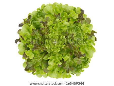 Circle lettuce background - stock photo