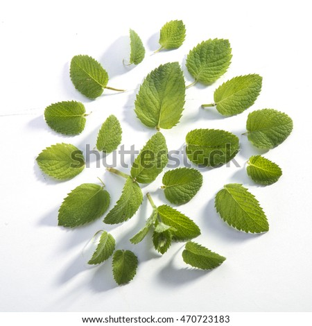 Circle of mint leaves