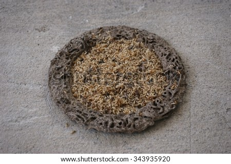 circle of termite hill on concrete floor - stock photo
