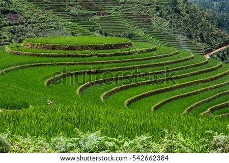 circle rice farm, amazing rice terraces in Vietnam, farm like ladder on the mountains, glass and field in front of picture