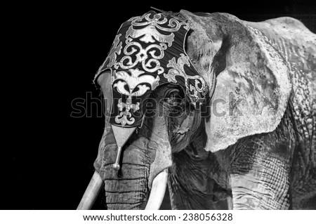 circus elephant on black background - stock photo