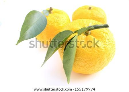 Citron - stock photo