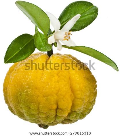 Citrus Pursha Sweet Lemon, one fruit  close up isolated on white background - stock photo