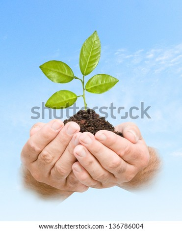 citrus tree in hands