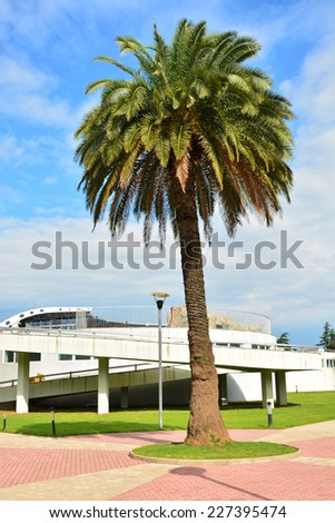 City landscape with Date palm (Phoenix dactylifera)  - stock photo