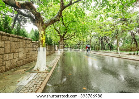 city Road with trees