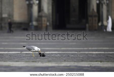 city seagull - stock photo
