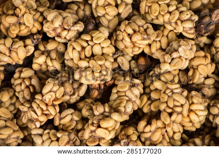 Civet cat poo containing digested coffee beans. Once roasted, the coffee - known as Kopi Luwak - fetches very high prices - stock photo