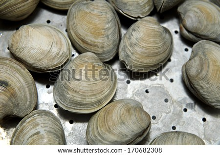 Clams cooked in steamer - stock photo