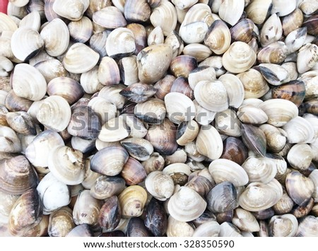 clams for sale in a market - stock photo