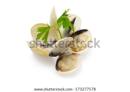 clams isolated - stock photo