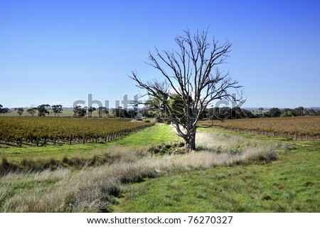 Clare Valley Vineyard in Adelaide