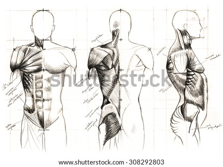 Classic Black White Pencil Drawing Human Stock Illustration ...