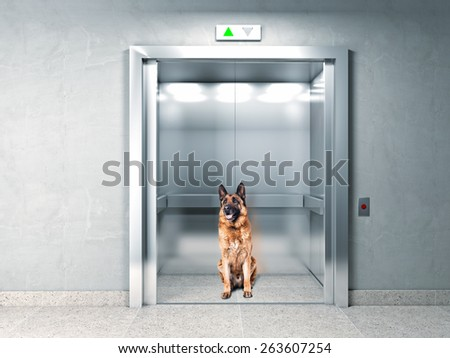 classic elevator and german shepherd - stock photo